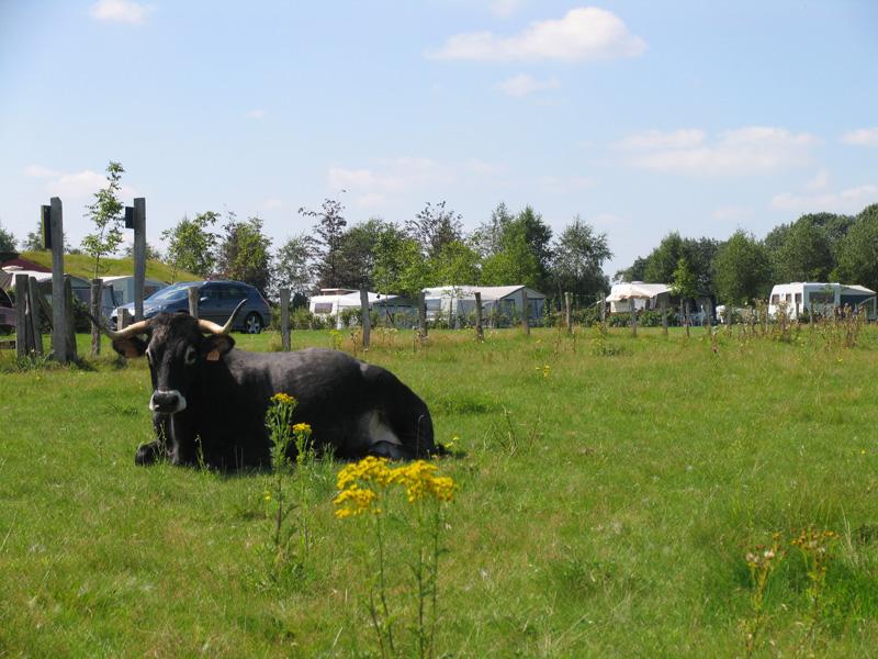 https://www.minicampingcard.de/friksbeheer/wp-content/uploads/2013/06/lindenhof.4-270x200.jpg